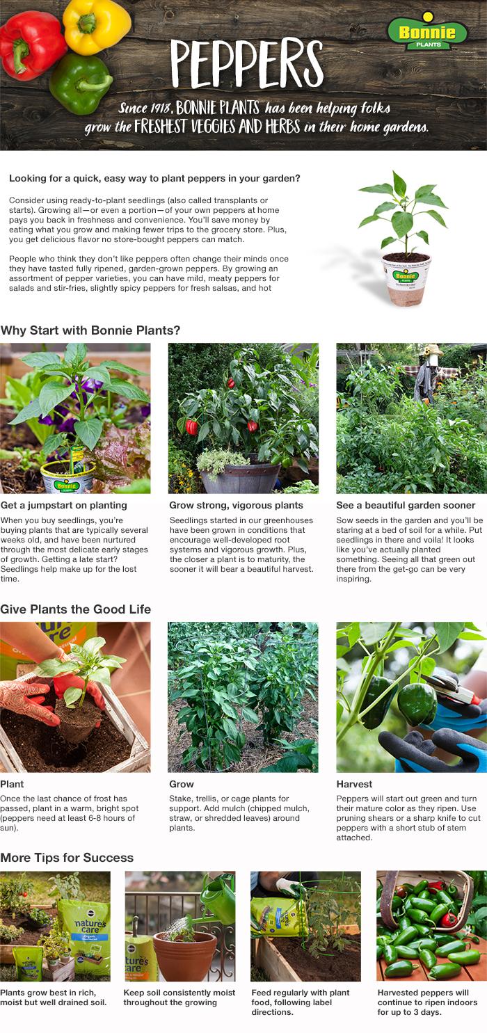 Habanero Plants Home Depot